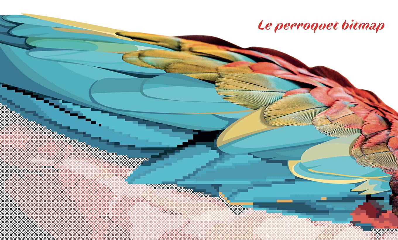 perroquet bitmap